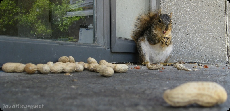 Guilty Squirrel